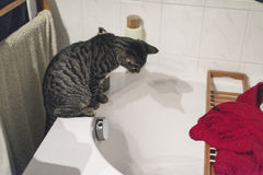 Curious tabby cat on edge of bath watching flowing water. Stock Photo