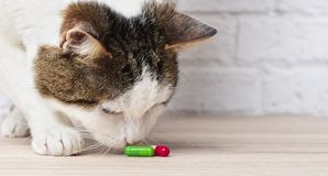 Curious tabby cat sniffs on medicine capsules. Horizontal image with copy space royalty free stock photos