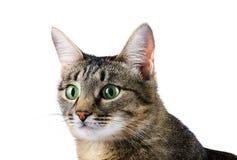 Curious tabby cat Stock Photos