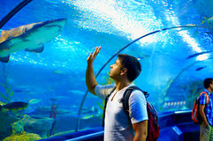 Curious tourist watching with interest on shark in oceanarium tunnel Royalty Free Stock Photos