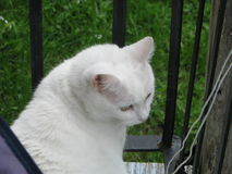 Curious white cat. On an old balcony Stock Photos