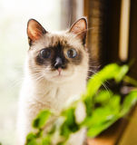 Curious wide-eyed kitten Stock Images