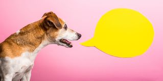 Curious wondering asking emotion expression dog muzzle. pink background and yellow speech balloon. Funny bright photo
