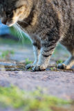 Curious young cat Stock Photo