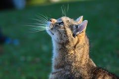 Curious young cat Royalty Free Stock Photos
