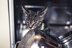 Curious young cat exploring inside a dishwasher Stock Images