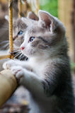 Curious young kitten Royalty Free Stock Images