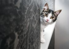 Curious young kitten peeking around a corner Stock Photos