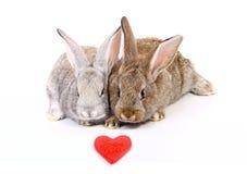 Curious young rabbits Stock Photos