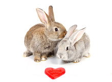 Curious young rabbits Stock Photography