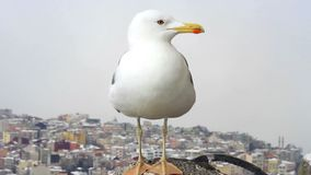 Curious young seagull Stock Photography