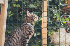 Curious young tabby cat lookign through fence in garden Stock Image