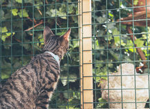 Curious young tabby cat looking through fence in garden Stock Photo