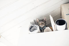 Curious young tabby cat lying in messy loft. Looking down. Low a Royalty Free Stock Images