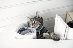Curious young tabby cat lying in messy loft. Low angle view. Royalty Free Stock Photography