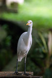 Curioused Crane bird Stock Images