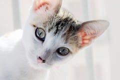Curiouskitten Mały kot w domu mały pet Zdjęcia Royalty Free