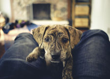 Free Curiously Cute Mountain Cur Rescue Puppy And A Camera Stock Photo - 95409360