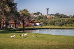 Lake view of Barigui Park with geese and Panoramic Tower in background - Curitiba, Parana, Brazil Royalty Free Stock Photos