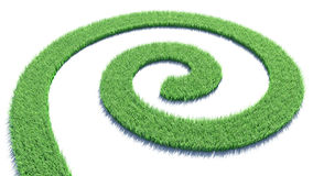 Curl of green grass Stock Images