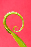 Curl leaf Stock Photography