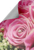 Curl paper with roses Royalty Free Stock Image