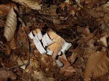 Curled birch bark Stock Photos