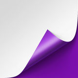 Curled corner of White paper with shadow on Purple Background Stock Photos