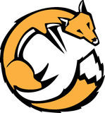 Curled Fox Stock Photography