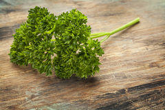 Curled leaf parsley. A fresh leaves of curled leaf parsley on wood surface stock photo