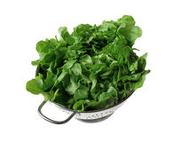 Curled lettuce Royalty Free Stock Images