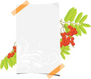 Curled paper sheet with rowan branch Royalty Free Stock Image