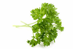 Curled Parsley. Sprig of curled parsley on white Stock Photo