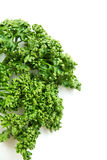 Curled Parsley Royalty Free Stock Photos