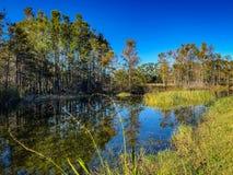 Autumn swamp plants royalty free stock photography