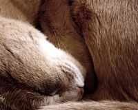 Curled up cat Stock Photography