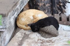 Curled up cats Royalty Free Stock Photos