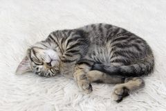 Curled up kitten Stock Photo