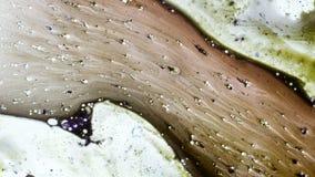 Curlicue farby Obraz Stock