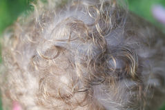 Curly baby hair Stock Image