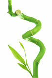 Curly Bamboo Stock Images