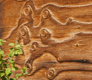 Curly Barn Wood Siding with Plants. Aged barn wood with interesting curly knots and accent foliage detail for backgrounds and textures. Horizontal boards in a Royalty Free Stock Images