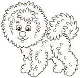 Curly Bichon Frise dog royalty free illustration