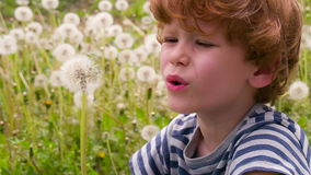 Curly Boy and Dandelions stock video