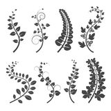 Curly branches with leaves silhouettes on white background Stock Photography