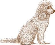 Curly dog Stock Image