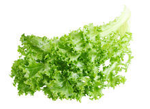 Curly Endive Stock Image