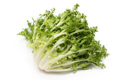 Curly Endive Stock Photos