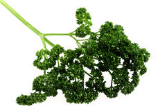Curly English parsley Stock Photo