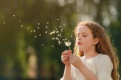 curly girl blowing dandelion in sunset light. Stock Image